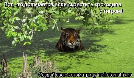 Котоматрица: Вот что получается если скрестить крокодила  с тигром!