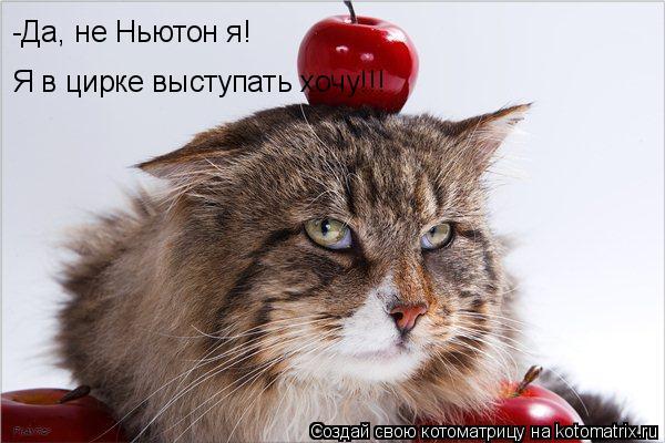 Котоматрица: -Да, не Ньютон я! Я в цирке выступать хочу!!!