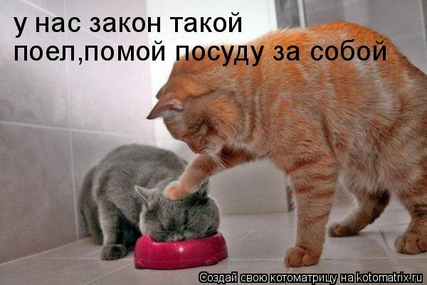 помой посуду за собой картинки