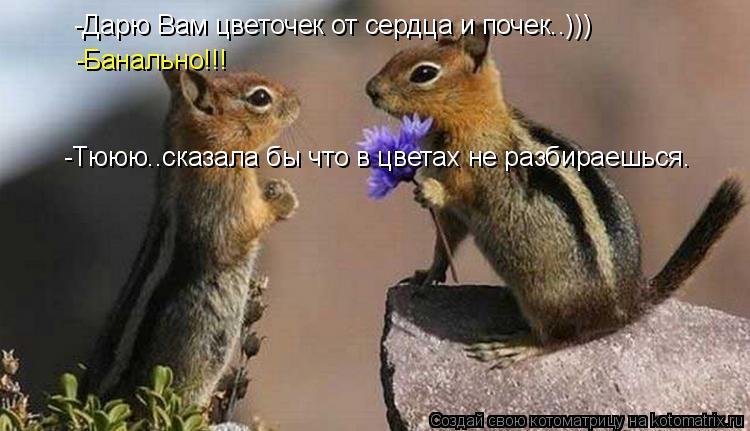 Котоматрица: -Дарю Вам цветочек от сердца и почек..))) -Банально!!! -Тююю..сказала бы что в цветах не разбираешься.