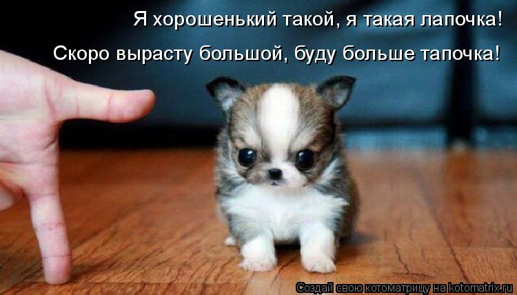 Котоматрица: Я хорошенький такой, я такая лапочка! Скоро вырасту большой, буду больше тапочка!
