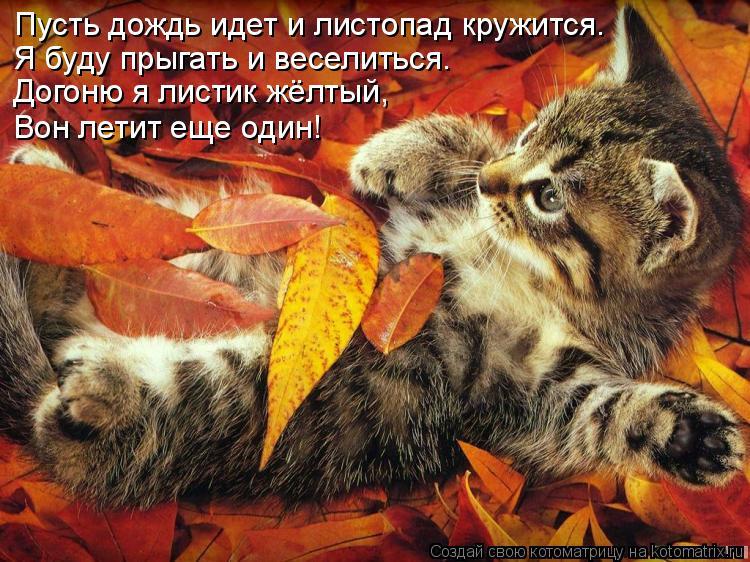 Котоматрица: Пусть дождь идет и листопад кружится. Я буду прыгать и веселиться. Догоню я листик жёлтый, Вон летит еще один!