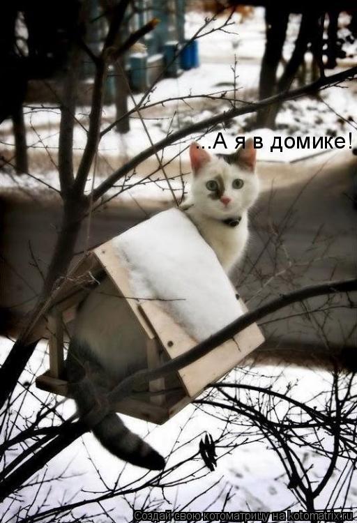 Котоматрица: ...А я в домике!