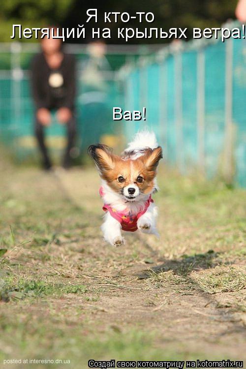 Котоматрица: Я кто-то Летящий на крыльях ветра! Вав!