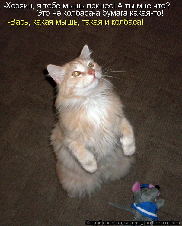 Котоматрица: -Хозяин, я тебе мышь принес! А ты мне что? Это не колбаса-а бумага какая-то! -Вась, какая мышь, такая и колбаса!