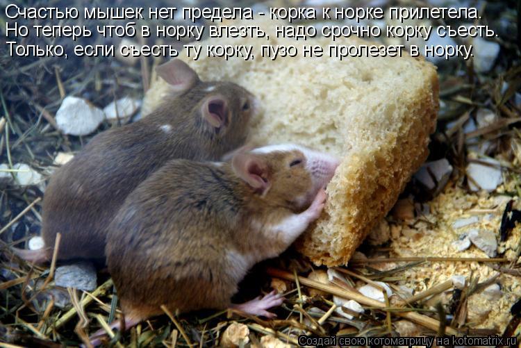 Котоматрица: Счастью мышек нет предела - корка к норке прилетела. Но теперь чтоб в норку влезть, надо срочно корку съесть. Только, если съесть ту корку, пу