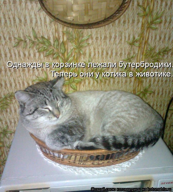 Котоматрица: Однажды в корзинке лежали бутербродики. Теперь они у котика в животике.