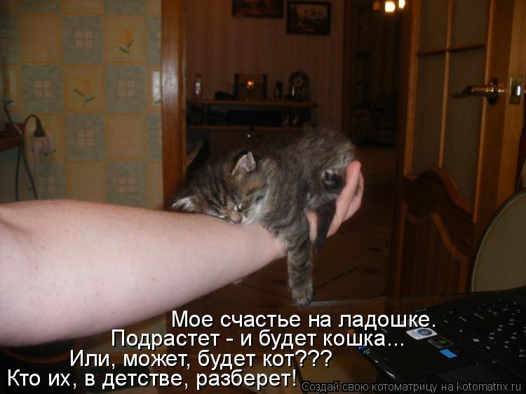 Котоматрица: Мое счастье на ладошке. Подрастет - и будет кошка... Или, может, будет кот??? Кто их, в детстве, разберет!