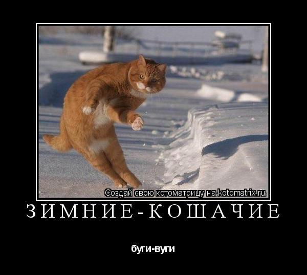 Котоматрица: зимние-кошачие буги-вуги
