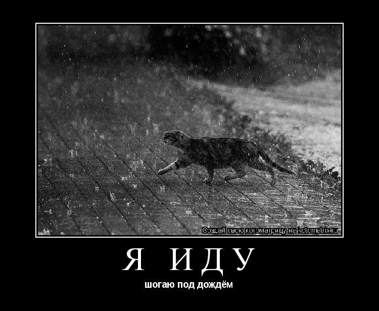 Котоматрица: я иду шогаю под дождём