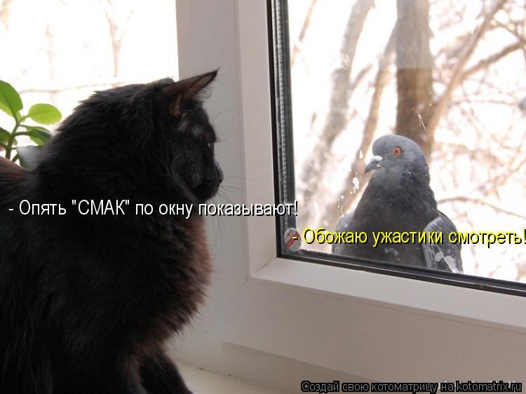 """Котоматрица: - Опять """"СМАК"""" по окну показывают! - Обожаю ужастики смотреть!"""
