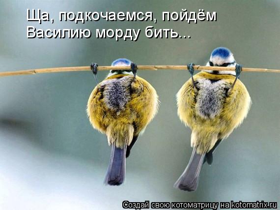 Котоматрица: Ща, подкочаемся, пойдём  Василию морду бить...