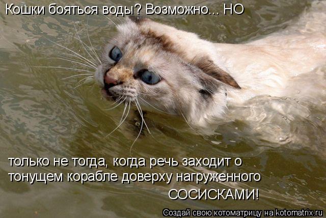Котоматрица: Кошки бояться воды? Возможно... НО только не тогда, когда речь заходит о тонущем корабле доверху нагруженного СОСИСКАМИ!