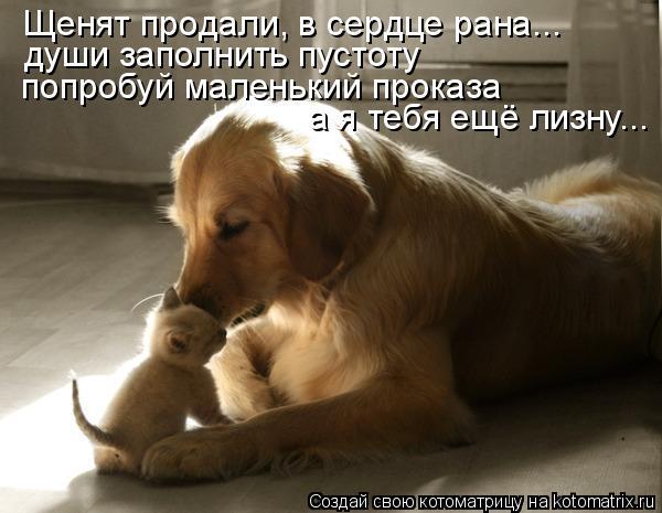 Котоматрица: Щенят продали, в сердце рана... души заполнить пустоту попробуй маленький проказа а я тебя ещё лизну...