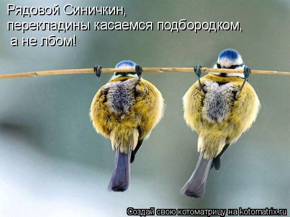 Котоматрица - Рядовой Синичкин, перекладины касаемся подбородком, а не лбом!
