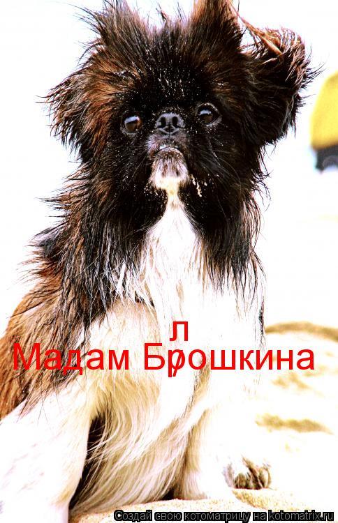 Котоматрица: Мадам Брошкина / л