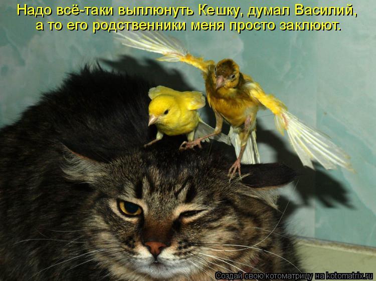 Котоматрица: Надо всё-таки выплюнуть Кешку, думал Василий, а то его родственники меня просто заклюют.