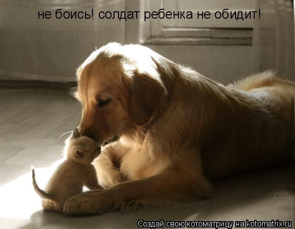 Котоматрица: не боись! солдат ребенка не обидит!