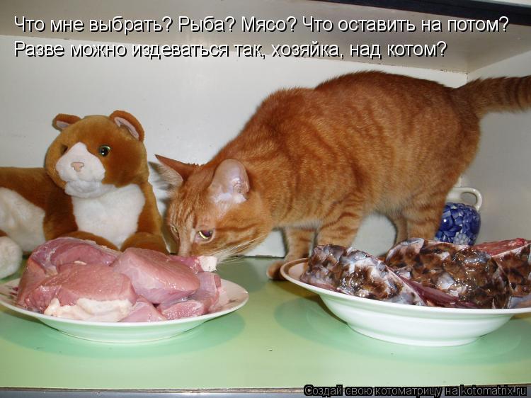 Котоматрица: Что мне выбрать? Рыба? Мясо? Что оставить на потом? Разве можно издеваться так, хозяйка, над котом?