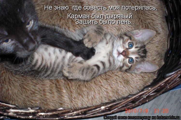 Котоматрица: Не знаю  где совесть моя потерялась,  Карман был дырявый  Зашить было лень..