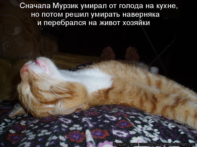 Котоматрица - Сначала Мурзик умирал от голода на кухне, но потом решил умирать навер