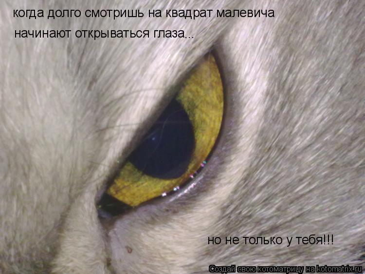 Котоматрица: когда долго смотришь на квадрат малевича начинают открываться глаза ... но не только у тебя!!!