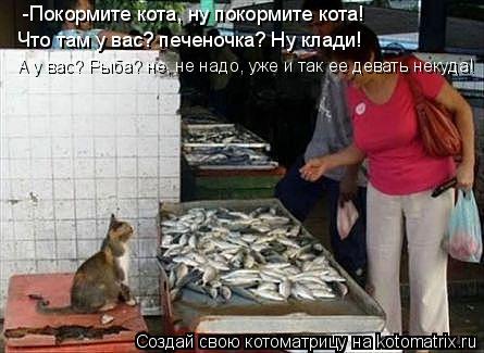 Котоматрица: -Покормите кота, ну покормите кота! Что там у вас? печеночка? Ну клади! А у вас? Рыба? не, не надо, уже и так ее девать некуда!
