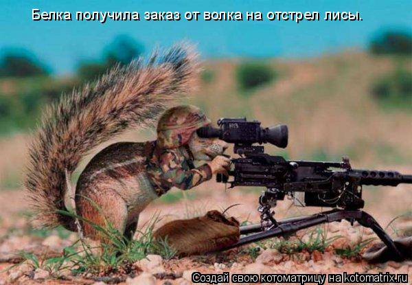 Котоматрица: Белка получила заказ от волка на отстрел лисы.