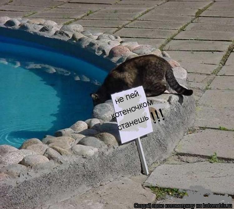 Котоматрица: не пей котеночком станешь !!!