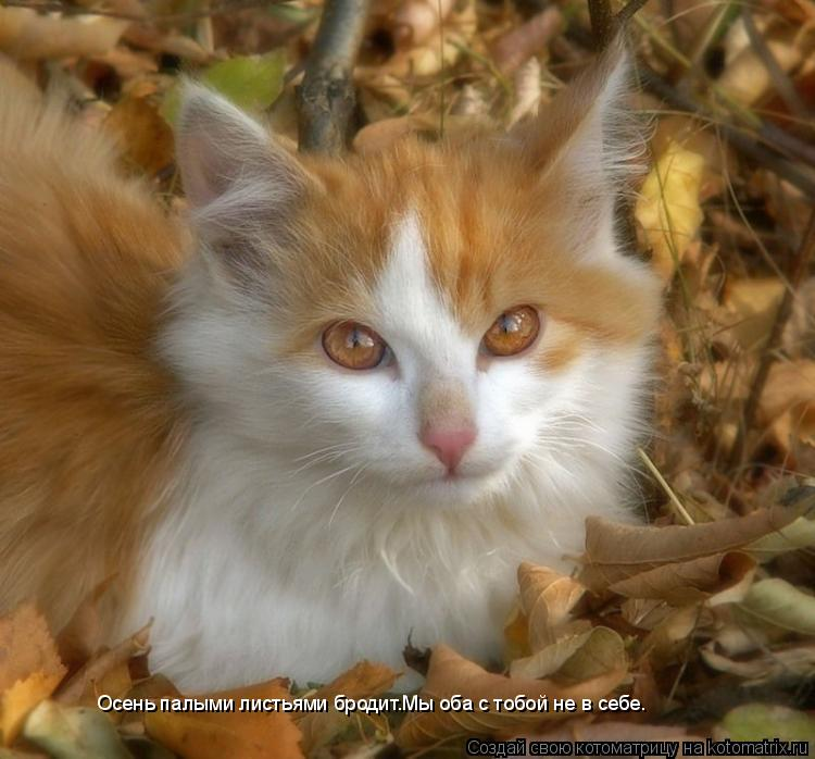 Котоматрица: Осень палыми листьями бродит.Мы оба с тобой не в себе.