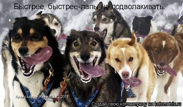 Котоматрица: Быстрее, быстрее-лапы не подволакивать. Киев-солнце. Киев. 02,12,2011