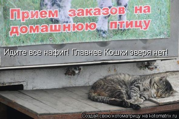 Котоматрица: Идите все нафиг! Главнее Кошки зверя нет!