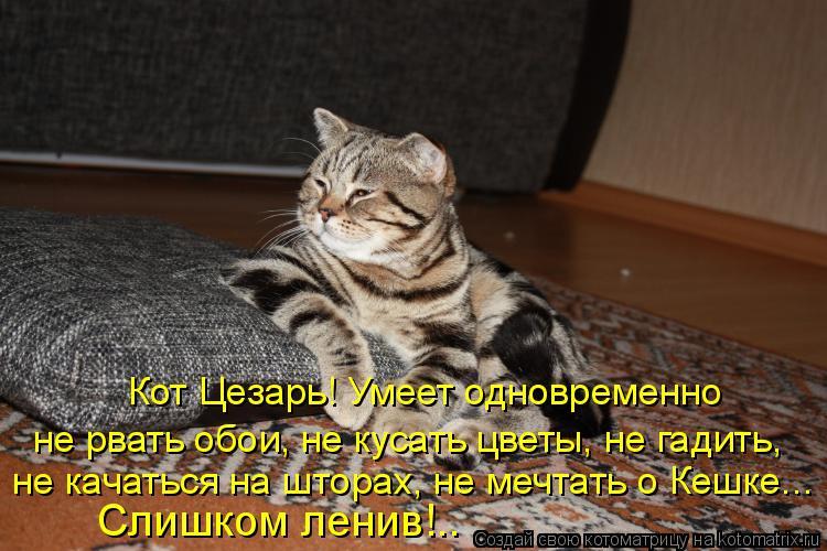Котоматрица: Кот Цезарь! Умеет одновременно не рвать обои, не кусать цветы, не гадить, не качаться на шторах, не мечтать о Кешке... Слишком ленив!..