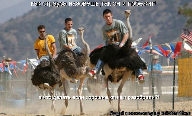 Котоматрица: как страуса назовёшь,так он и побежит! а что делать если хорошие клички разобрали?!