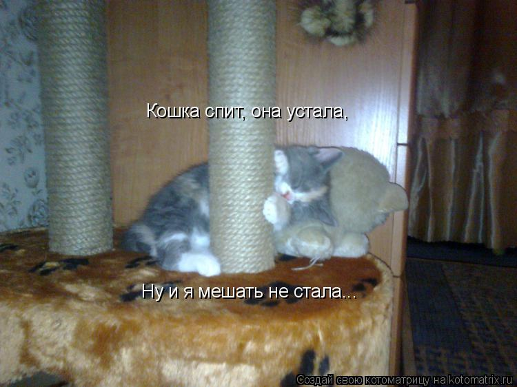 Котоматрица: Кошка спит, она устала, Ну и я мешать не стала...