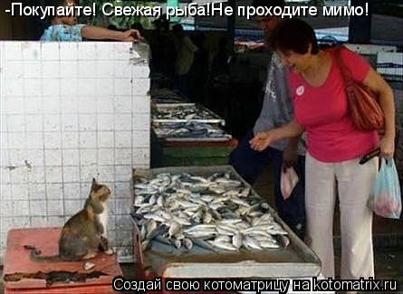 Котоматрица: -Покупайте! Свежая рыба!Не проходите мимо!