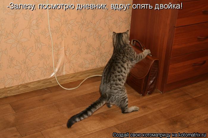 Котоматрица: -Залезу, посмотрю дневник, вдруг опять двойка!
