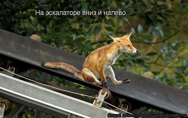 Котоматрица: На эскалаторе вниз и налево...