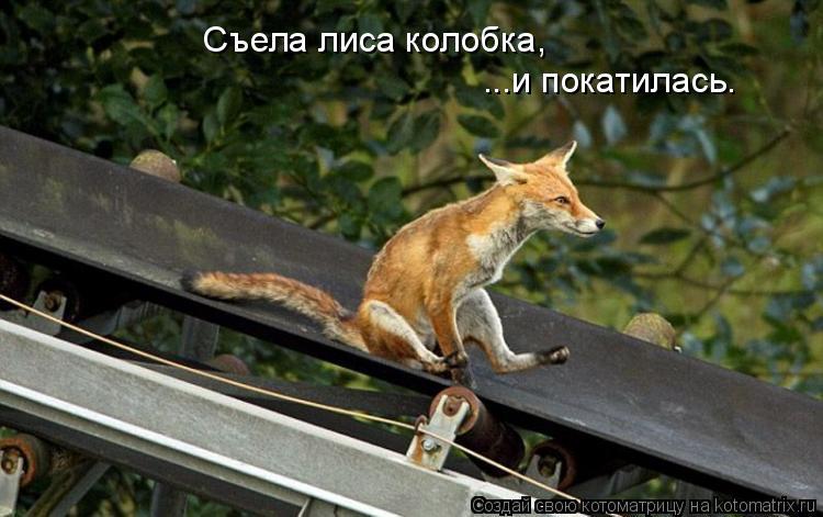Котоматрица: Съела лиса колобка, ...и покатилась.
