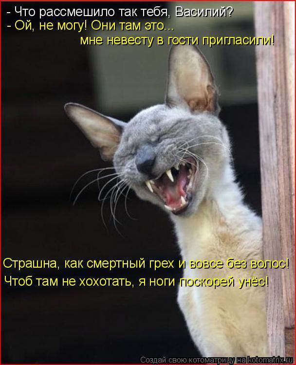 Котоматрица: - Что рассмешило так тебя, Василий? - Ой, не могу! Они там это... мне невесту в гости пригласили! Страшна, как смертный грех и вовсе без волос! Чт