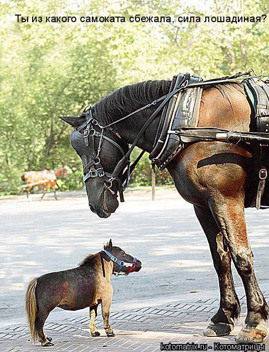 Котоматрица: Ты из какого самоката сбежала, сила лошадиная?
