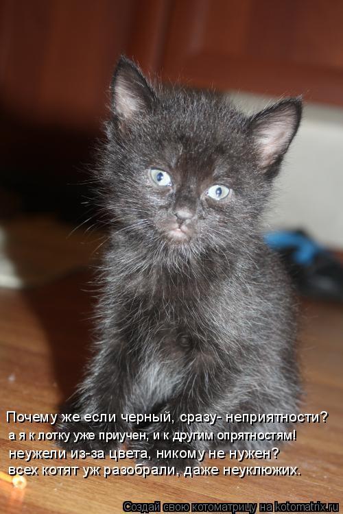 Котоматрица: Почему же если черный, сразу- неприятности? а я к лотку уже приучен, и к другим опрятностям! неужели из-за цвета, никому не нужен?  всех котят у