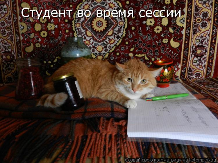 Котоматрица: Студент во время сессии