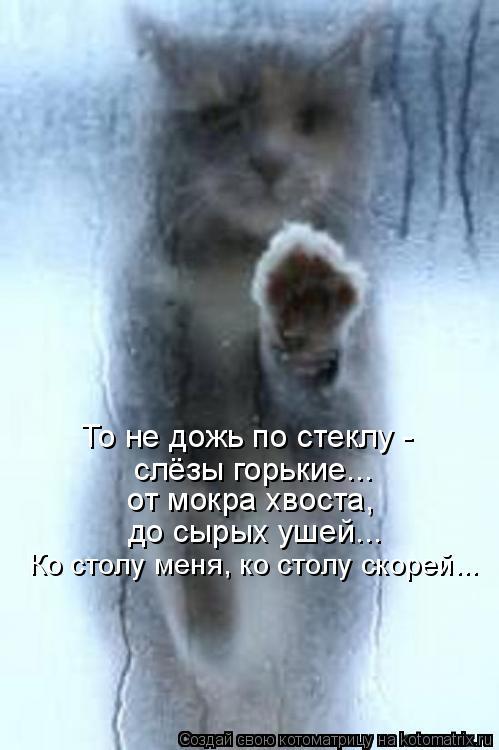 Котоматрица: То не дожь по стеклу - слёзы горькие... от мокра хвоста, до сырых ушей... Ко столу меня, ко столу скорей...