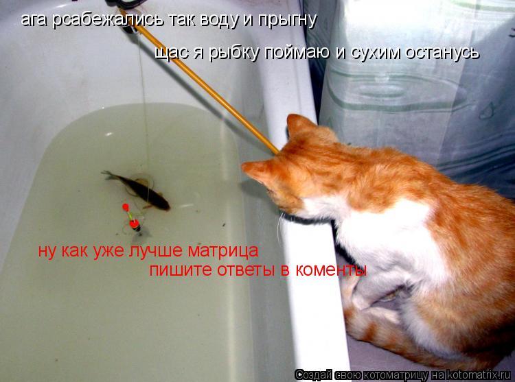 Котоматрица: ага рсабежались так воду и прыгну щас я рыбку поймаю и сухим останусь ну как уже лучше матрица пишите ответы в коменты