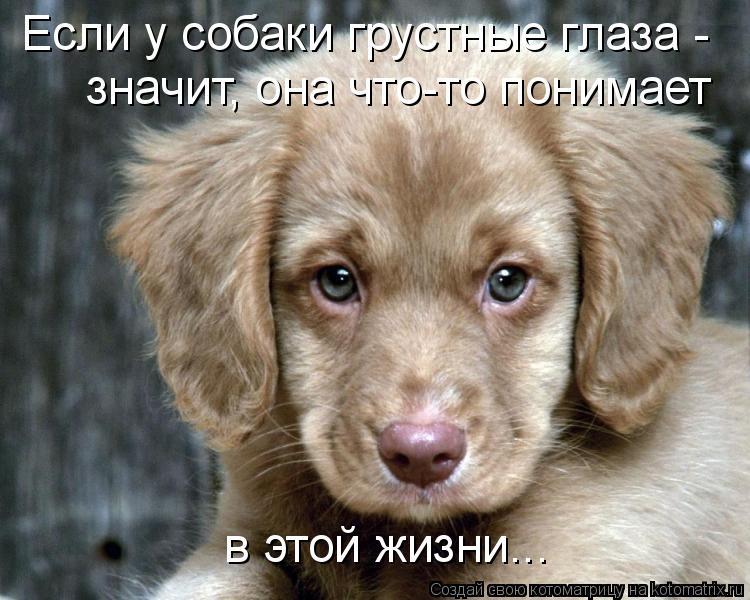 грустные собаки фото