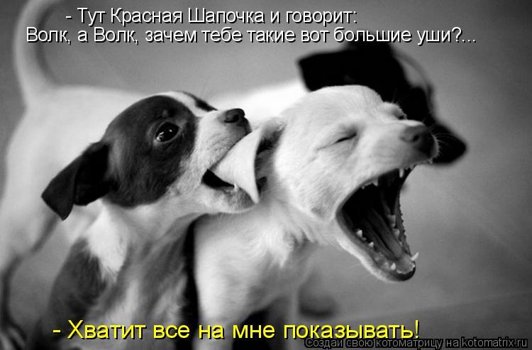 Котоматрица: - Тут Красная Шапочка и говорит:  Волк, а Волк, зачем тебе такие вот большие уши?...  - Хватит все на мне показывать!