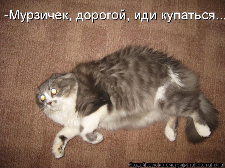 Котоматрица: -Мурзичек, дорогой, иди купаться...