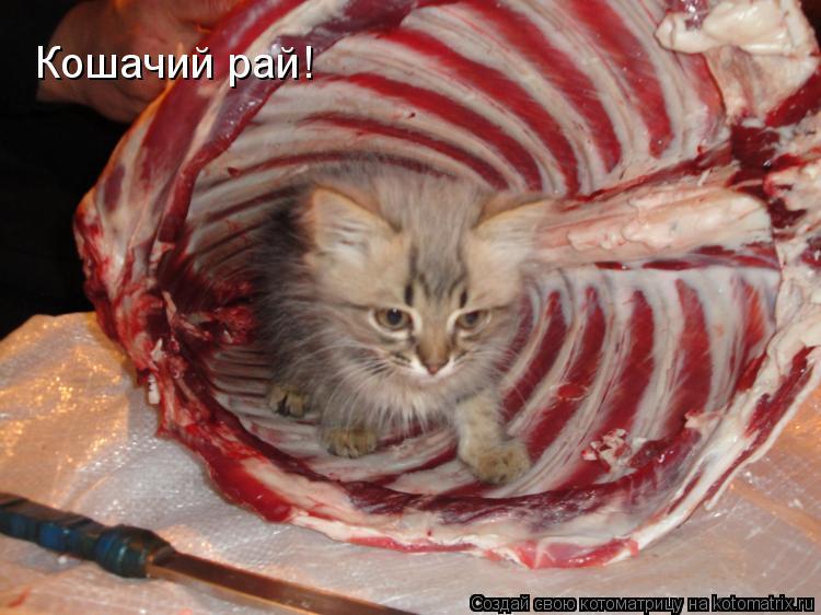 Котоматрица: Кошачий рай!