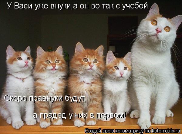 Котоматрица: У Васи уже внуки,а он во так с учебой... Скоро правнуки будут, а прадед у них в первом!